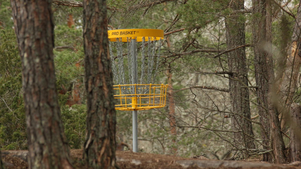 Social Gathering - Frisbee golf!